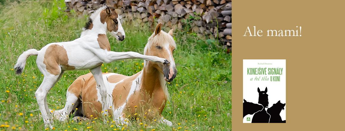 Konejšivé signály a řeč těla u koní