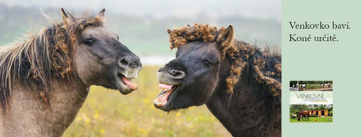 Venkovní ustájení koní