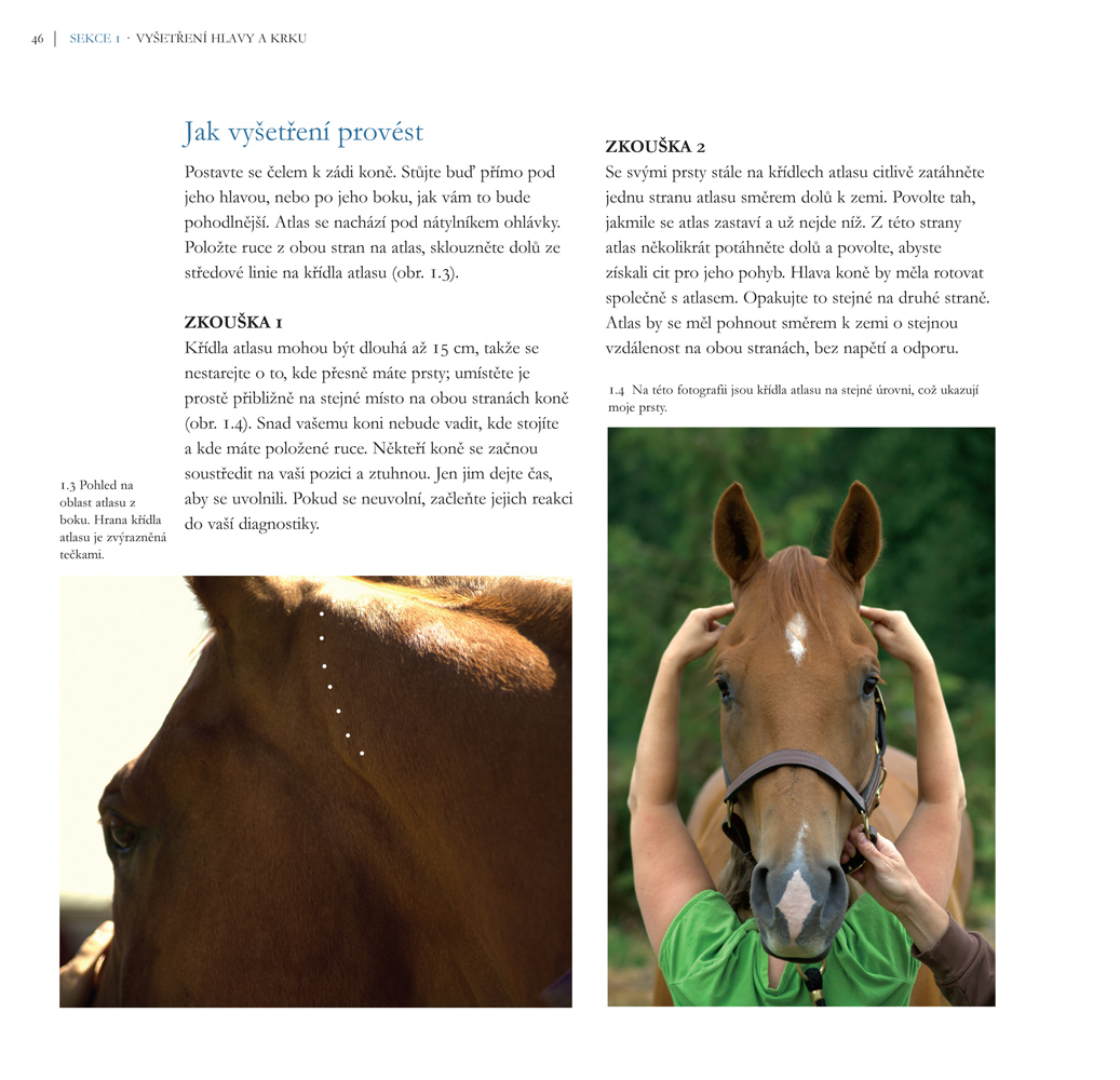 Chiropraxe, Kde to mého koně bolí? Renee Tucker, Atlas