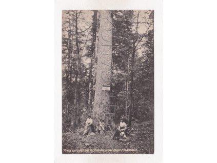 Železná Ruda Debrník památná jedle strom lidé ČB světlotisk Šumava 1a