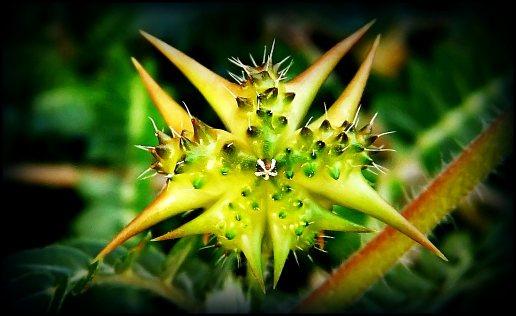 Obrázek plod