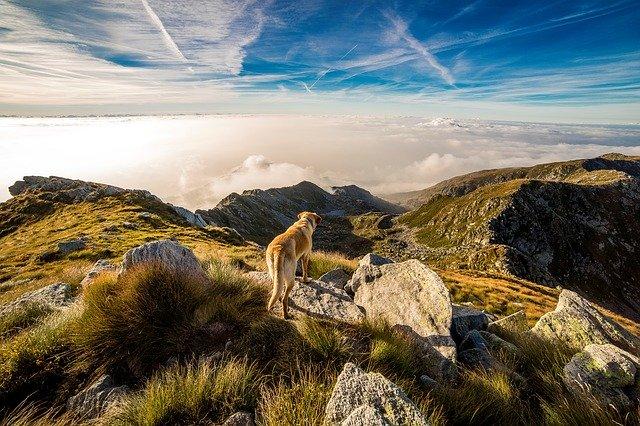 Dovolená se psem v Rakousku