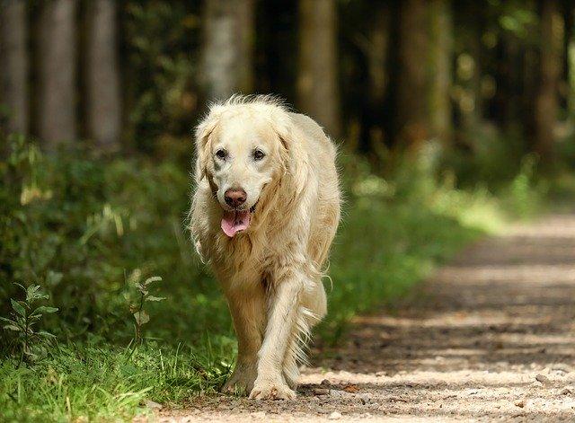pes-vylet-do-prirody