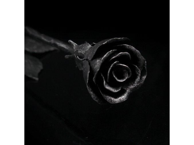 růže stříbrnočerná2kopie