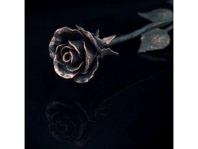růže měděná kopie
