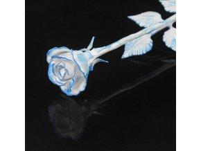 růže modrobílá