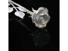 růže bílozlatá3