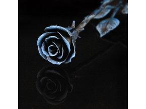 růže modročerná