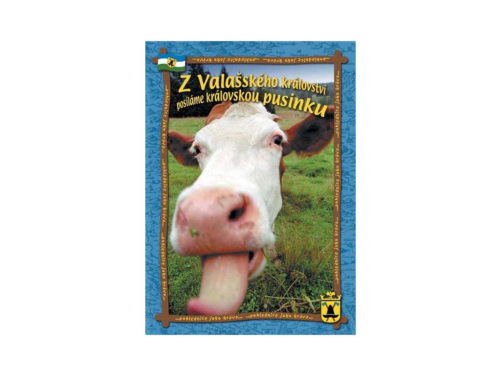 Pohlednice jako kráva, pohlednice formátu A4