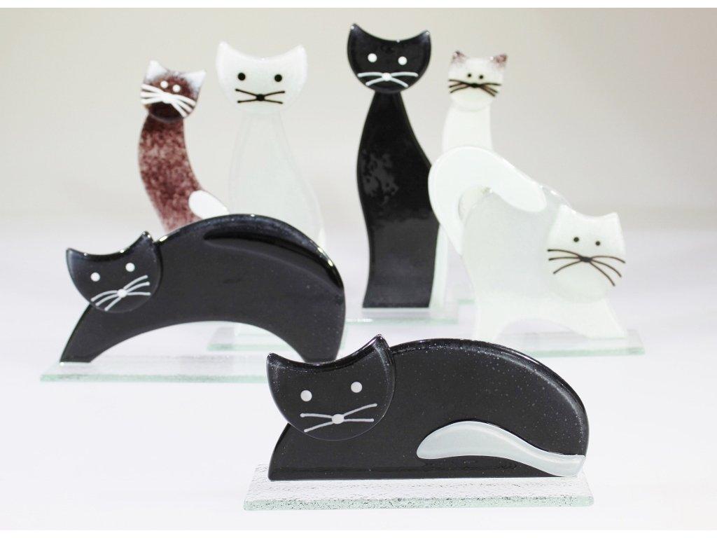 Pěkná černá kočička