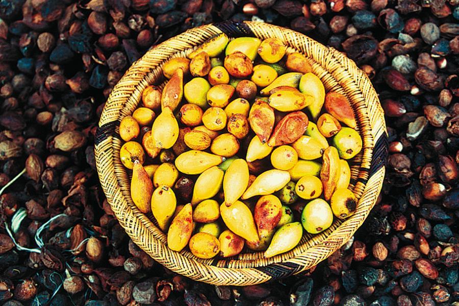 Jak se vyrábí arganový olej