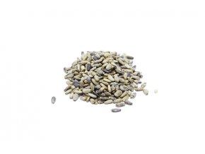 stropestrec plod