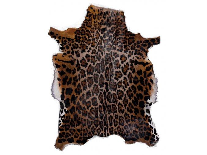 antilopa BLESBOCK - potisk leopard