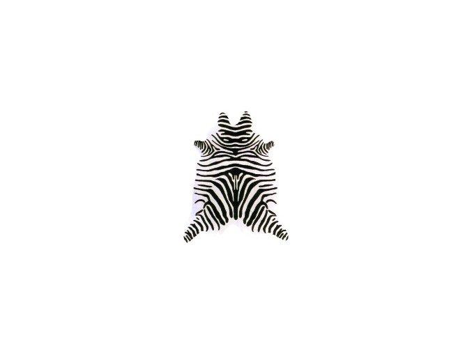 Zebra WI 04