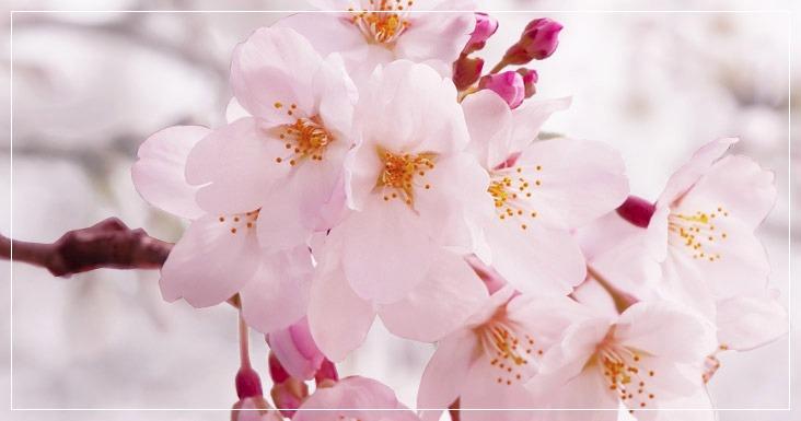 Kvetinové vône Kringle & Country Candle