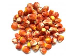 kukurice pomeranc