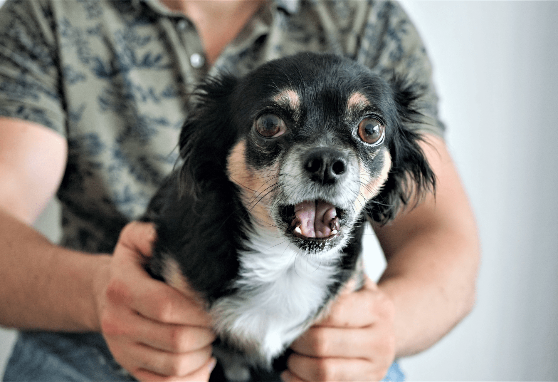 Pes a Silvestr - rady a tipy