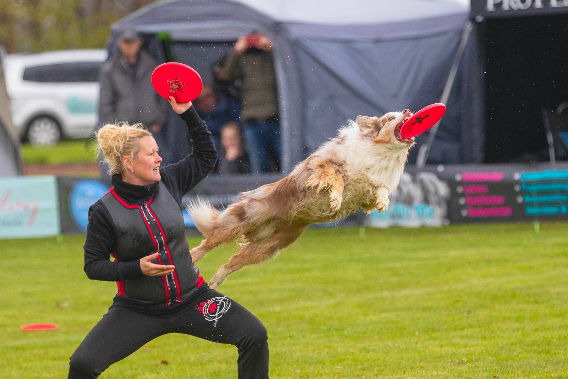 Psí sporty - Dogfrisbee
