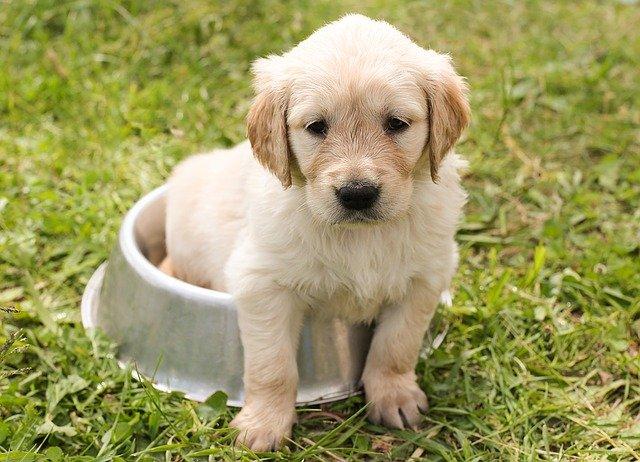 Jak vybrat misku pro psa