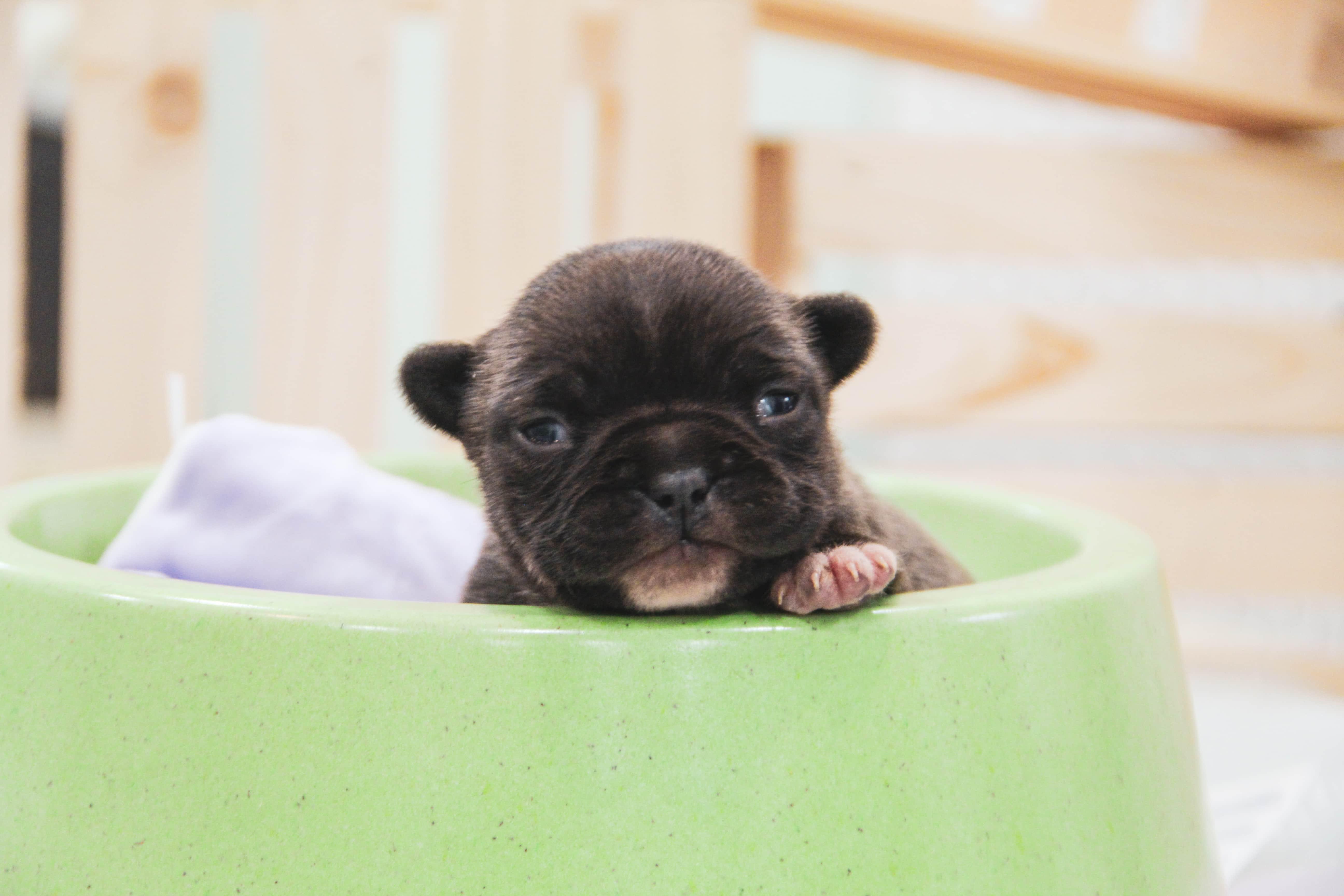 Jak na péči o psího novorozence a maminku?
