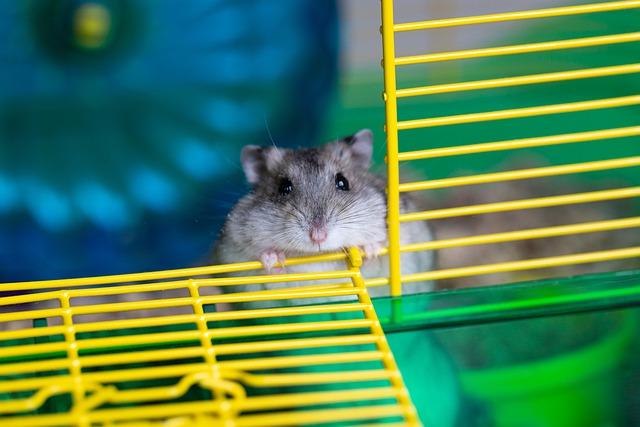 hamster-5115249_640