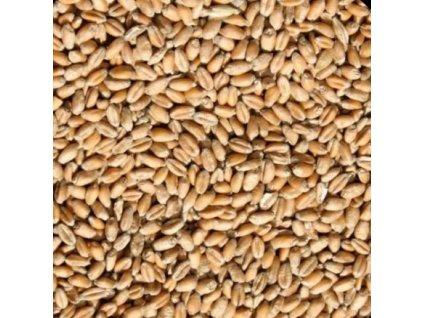 Krmná pšenice pro zvířata 1 kg