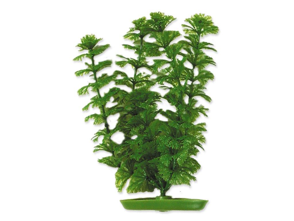 Rostlina LIVING WORLD Ambulia 30 cm