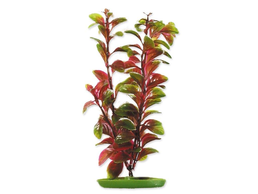 Rostlina MARINA Red Ludwigia 20 cm