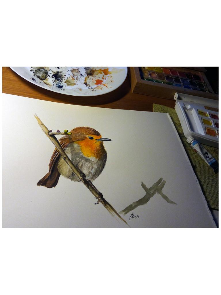 Robin02