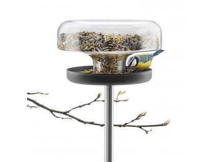 Table madáretető