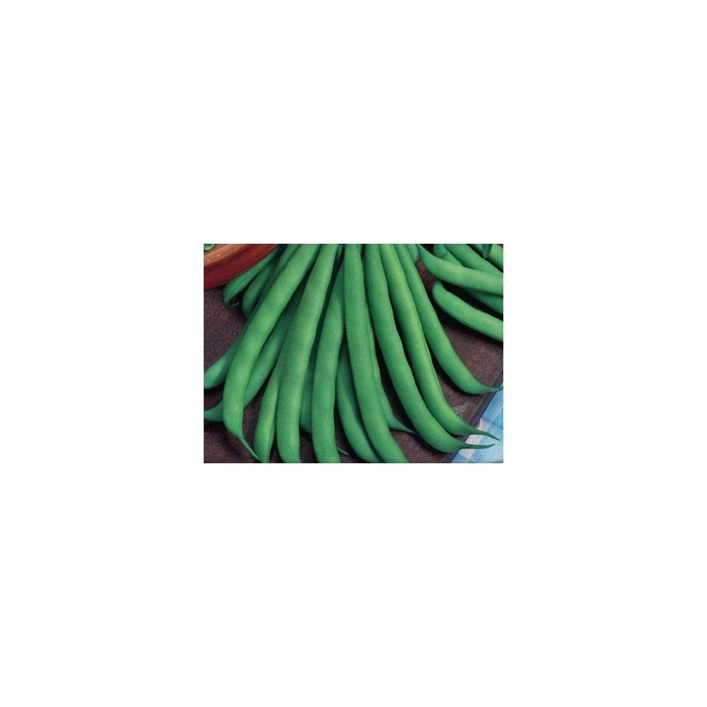 Novores - fazol keříčkový zelený - semena fazole 5 g