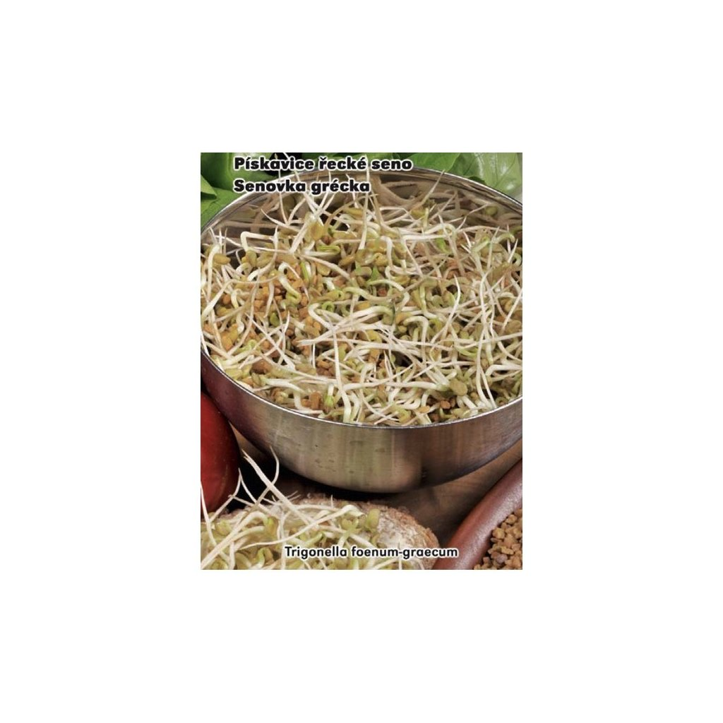 Pískavice řecké seno - semena 1,5 g