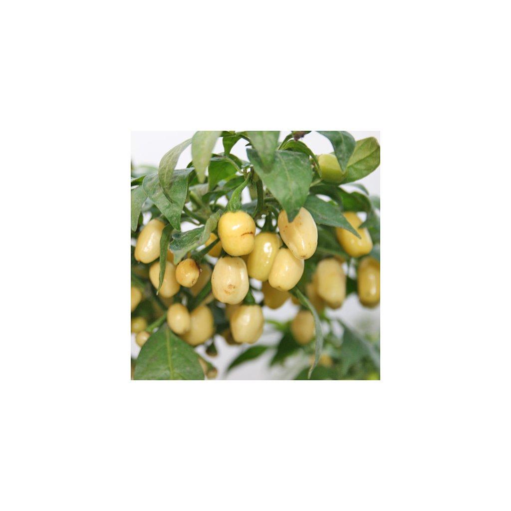 Habanero White bílé, extrémně pálivé chilli papričky - semena papriček - 5 ks