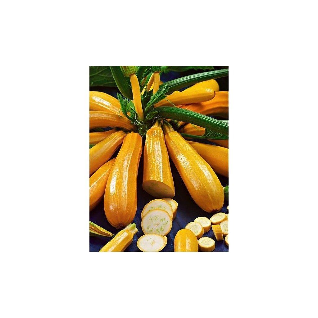 Cuketa Goldena - tykev cuketa - semena cukety 1,5 g