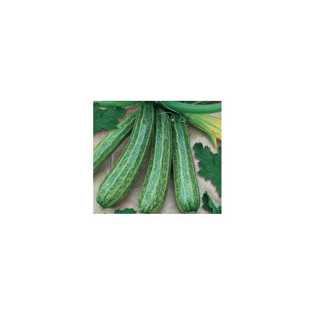 Cuketa Tapir - tykev cuketa - semena cukety 1,5 g