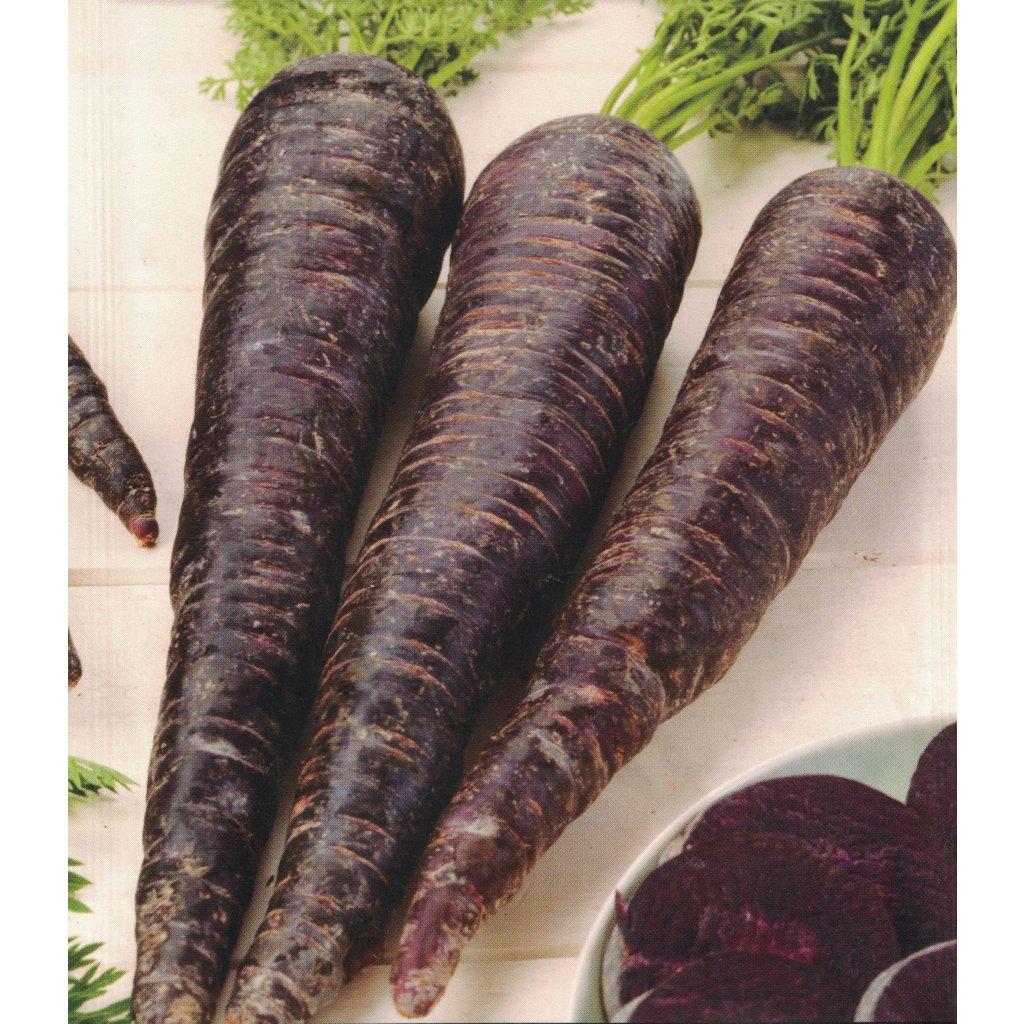 Mrkev obecná (Daucus carota) - odrůda Forrajera Morada - 1,5 g semen