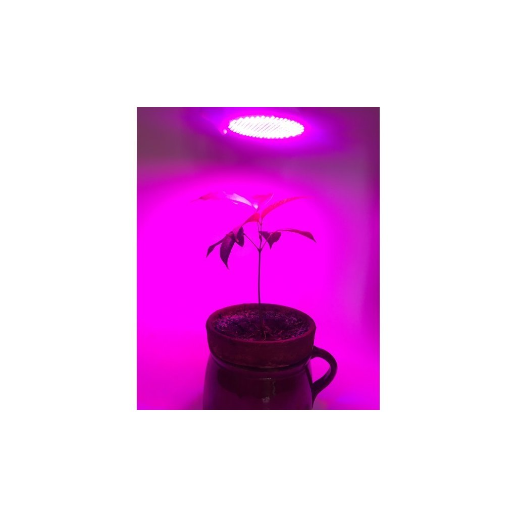 LED žárovka fialovo-červená, 12W E27 pro rostliny