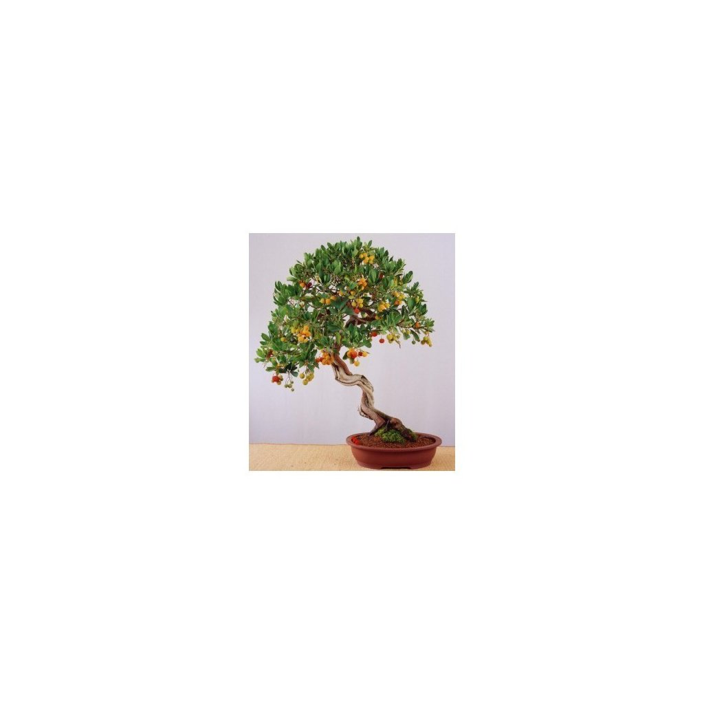 Jahodový strom - Planika obecná (Arbutus unedo) semena - 7 ks