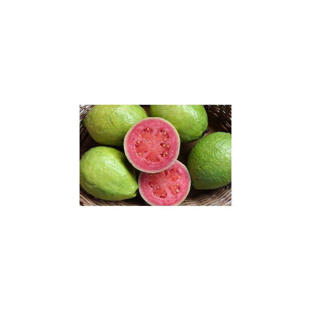 Kvajáva (Psidium guajava) - semena guave, gujáve - 10 ks
