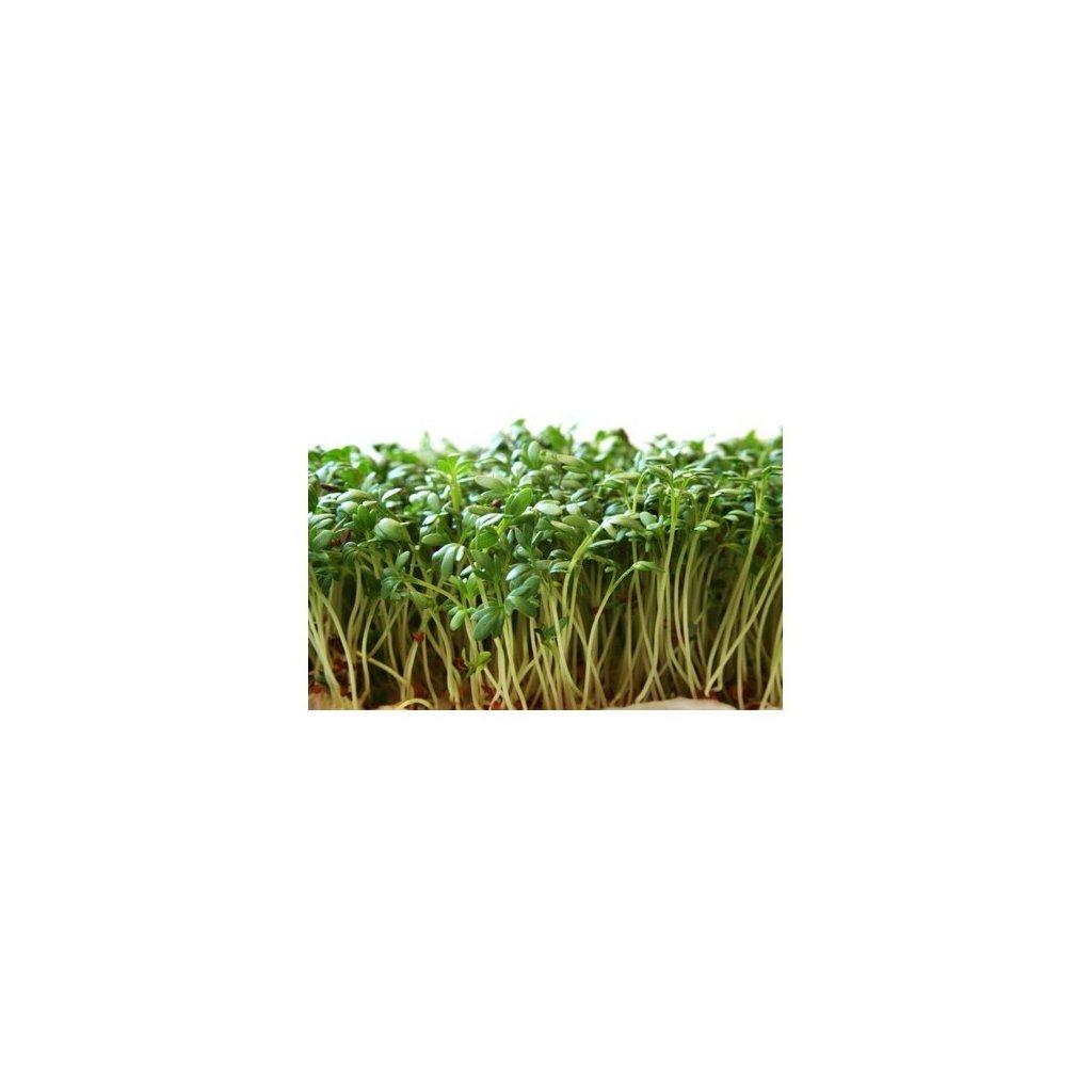 Řeřicha zahradní - Dánská - semena řeřichy, 8 g