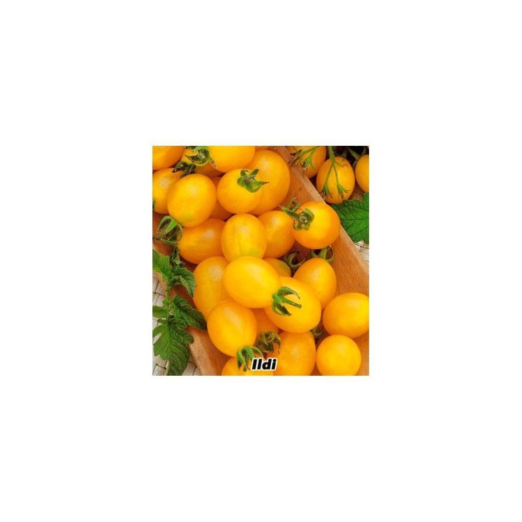 Rajče tyčkové rybízové žluté Ildi - semena rajčat 0,2 g, 50 ks