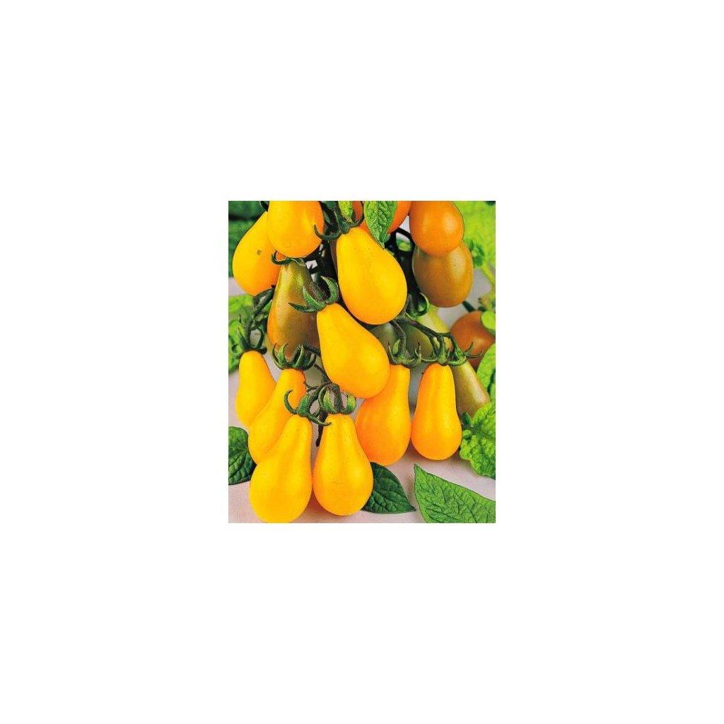 Rajče tyčkové rybízové žluté Yellow Pear Shaped - semena rajčat 0,2 g, 50 ks