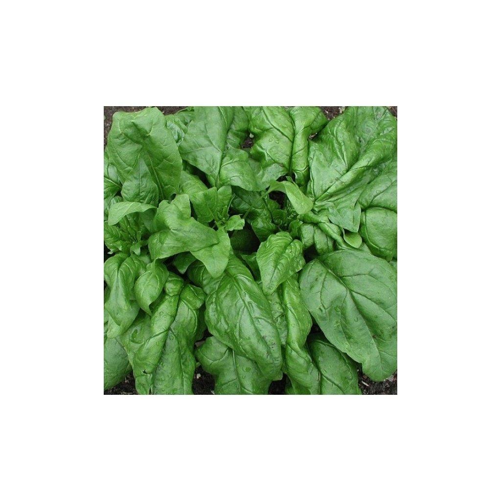 Špenát setý Matador - semena špenátu 8 g, 800 ks