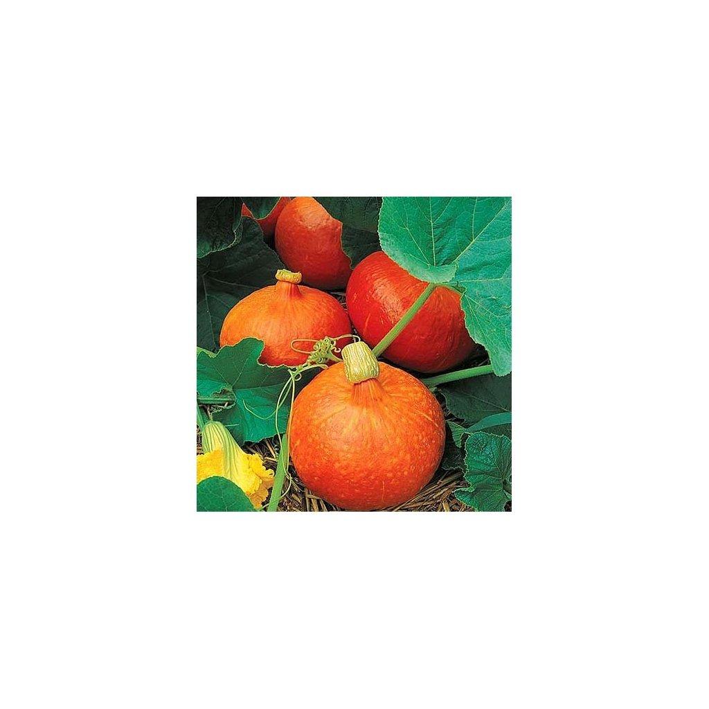 Dýně Hokkaido - tykev velkoplodá plazivá - semena tykve 1,5 g, 6 ks