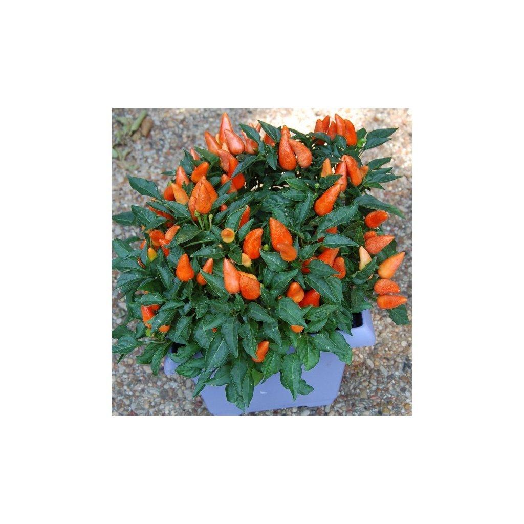 Foxta - okrasné oranžové chilli papričky - semena - 0,1 g, 15 ks
