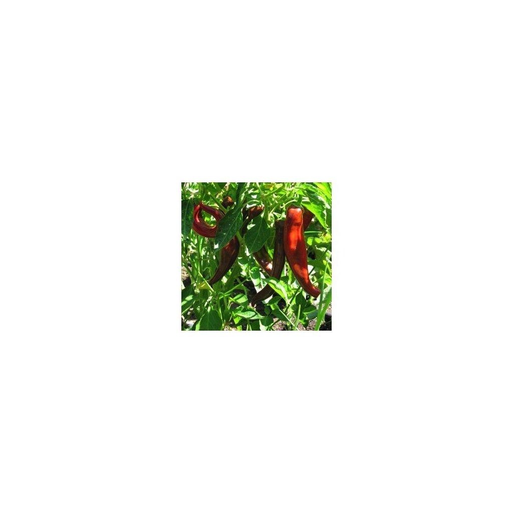 Anaheim - chilli papričky - semena mírně pálivých chilli papriček - 10 ks
