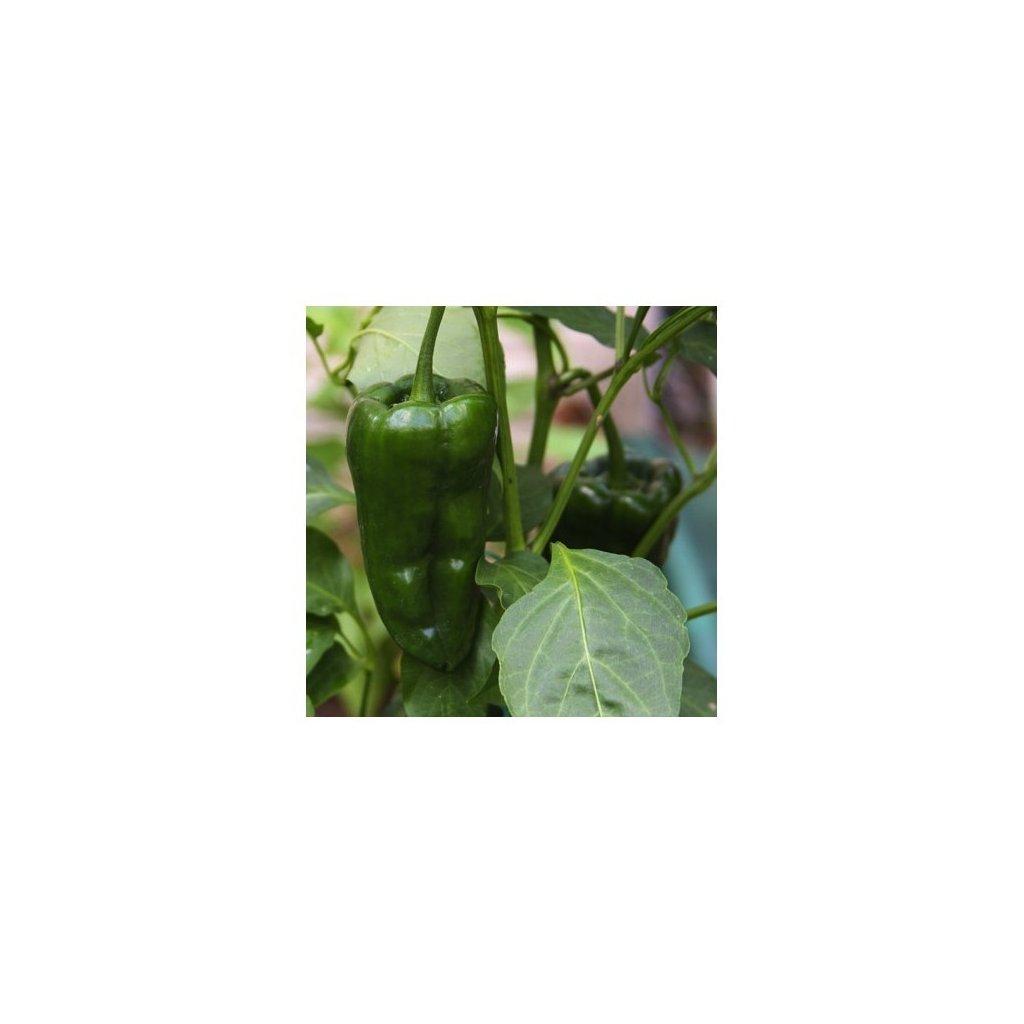 Poblano - mexické chilli papričky - semena mírně pálivých chilli papriček - 10 ks