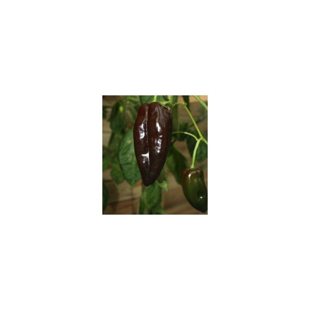 Mulato Isleno - hnědé chilli papričky - semena mírně pálivých chilli papriček - 10 ks