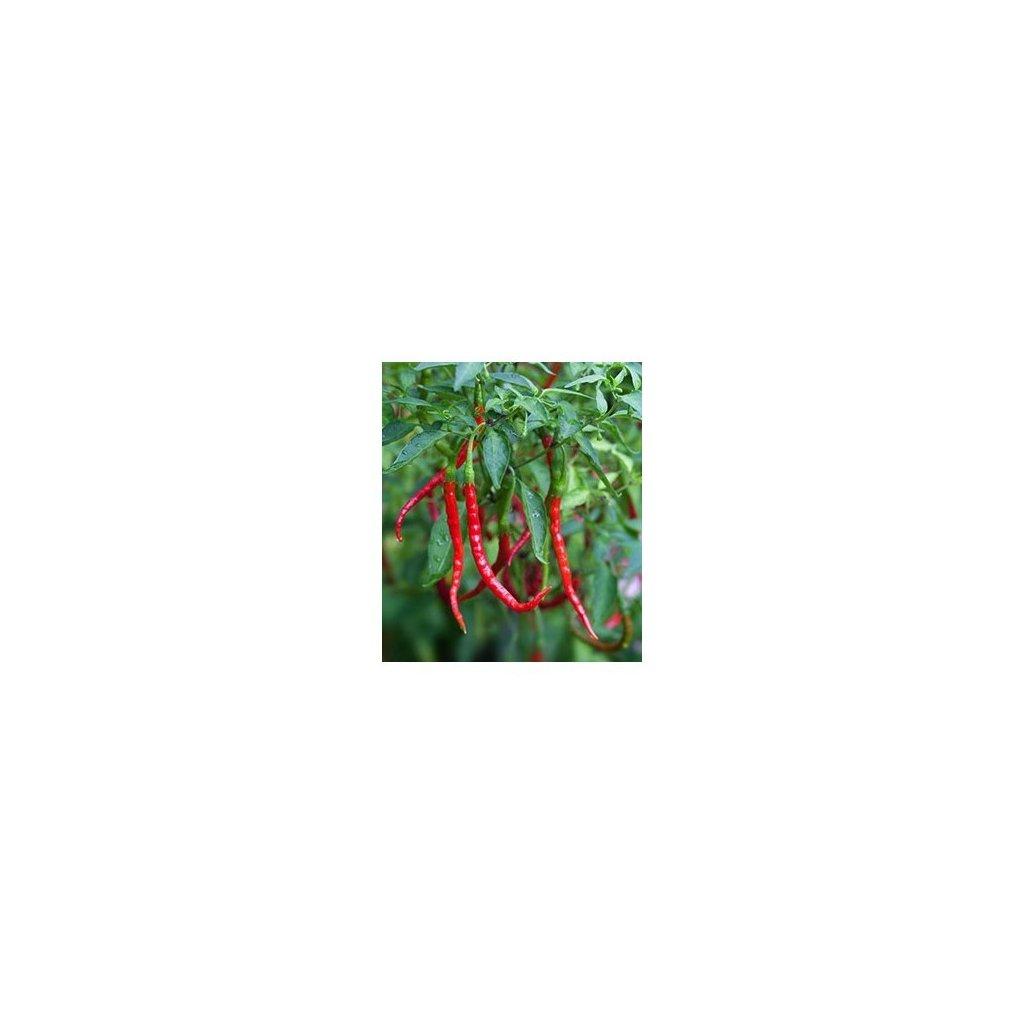 Chile de Arbol - červené chilli papričky - semena mírně pálivých chilli papriček - 10 ks
