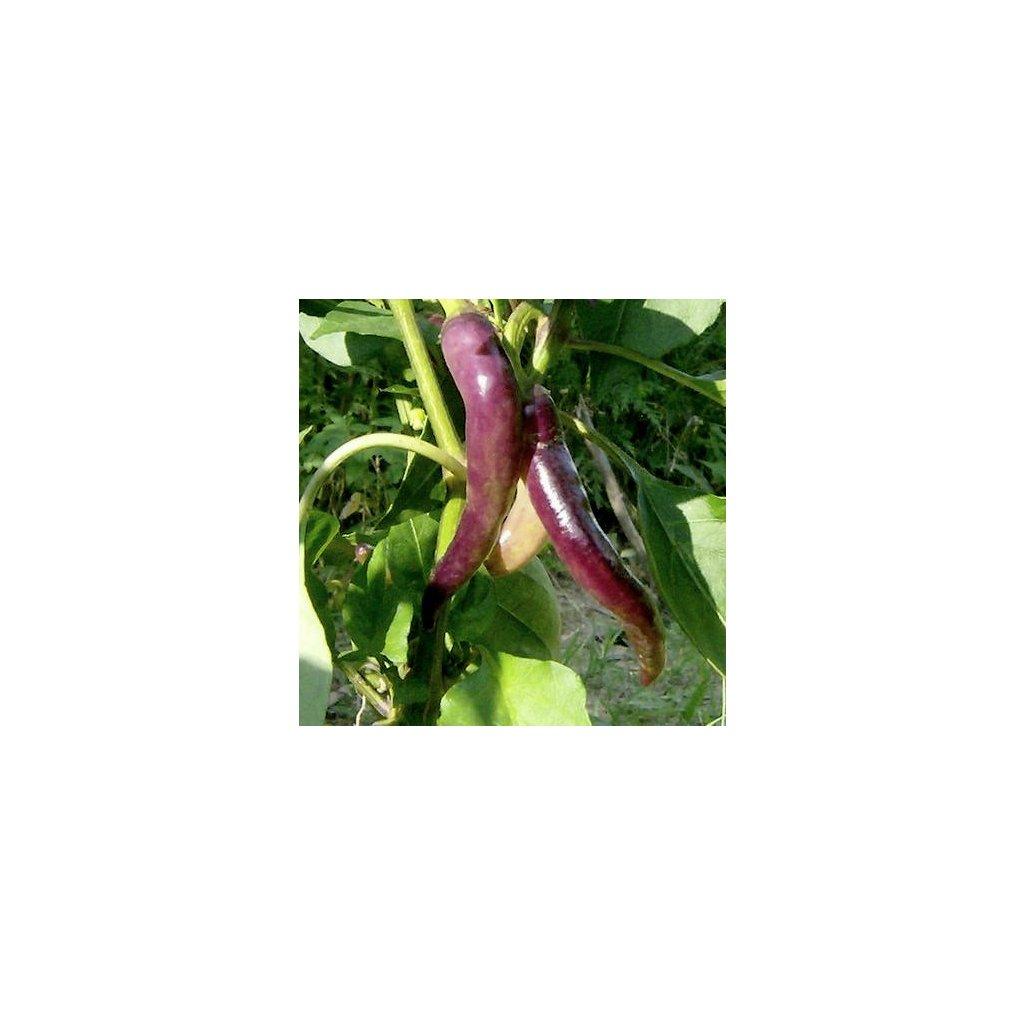 Cayenne Purple - kajenský pepř fialový - semena chilli papriček - 10 ks